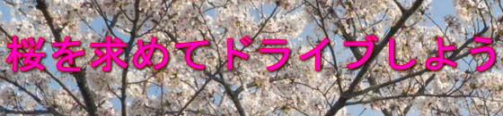 桜情報-ハイエースパーツ.net