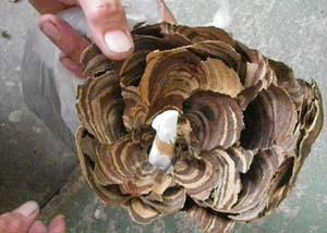 蜂の巣の内側