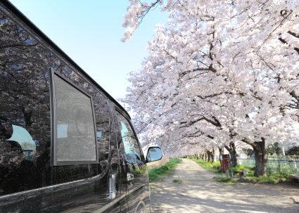 桜と4型ハイエースとバグネット(ハイエース網戸)