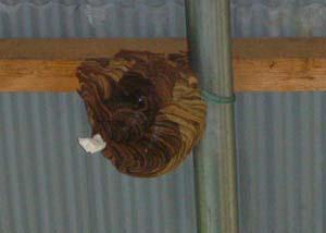 ハチの巣の入り口を塞ぎます